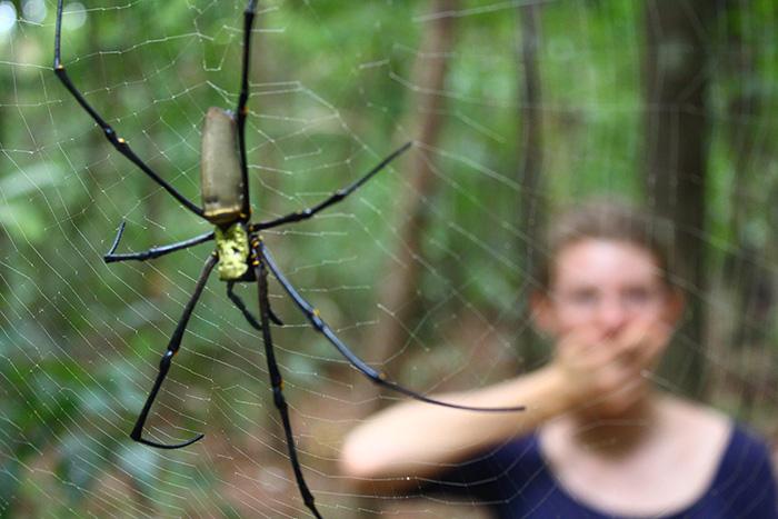 Erschreckende Spinne