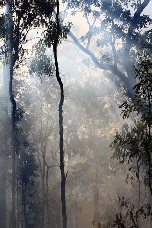 Waldbrand im Busch