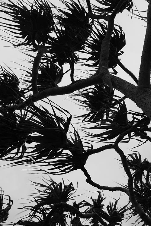 Dunkle Palmen